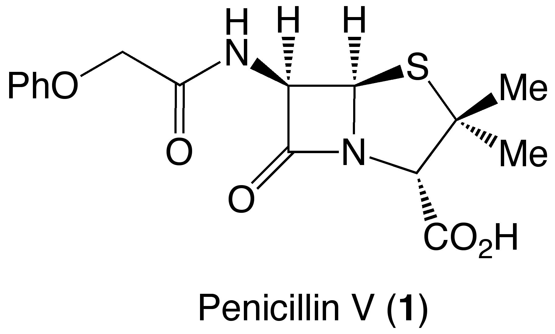 Classic Synthesis I Penicillin V