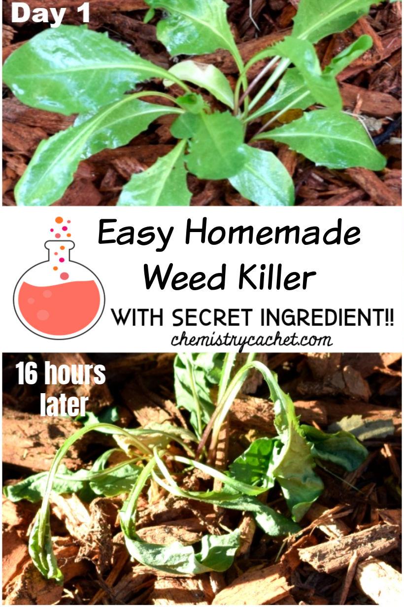 Easy Homemade Weed Killer (With Secret Ingredient!)