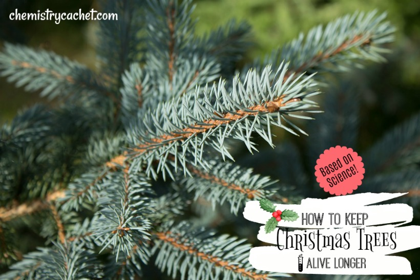 How to Keep Christmas Trees Alive Longer