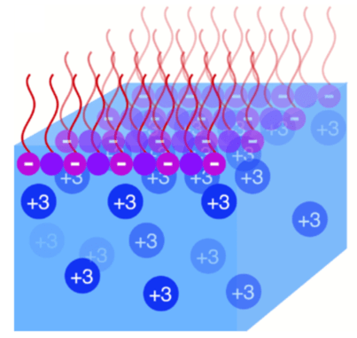 Electrostatic Origin of Element Selectivity during Rare Earth Absorption