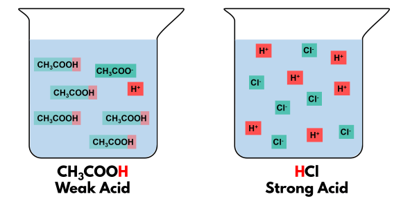 Diagram showing the partial dissociation of weak acid and complete dissociation of strong acid. Complete dissociation leads to a higher concentration of hydrogen ions.