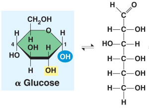Why is sucrose not a reducing sugar?   CheMystery