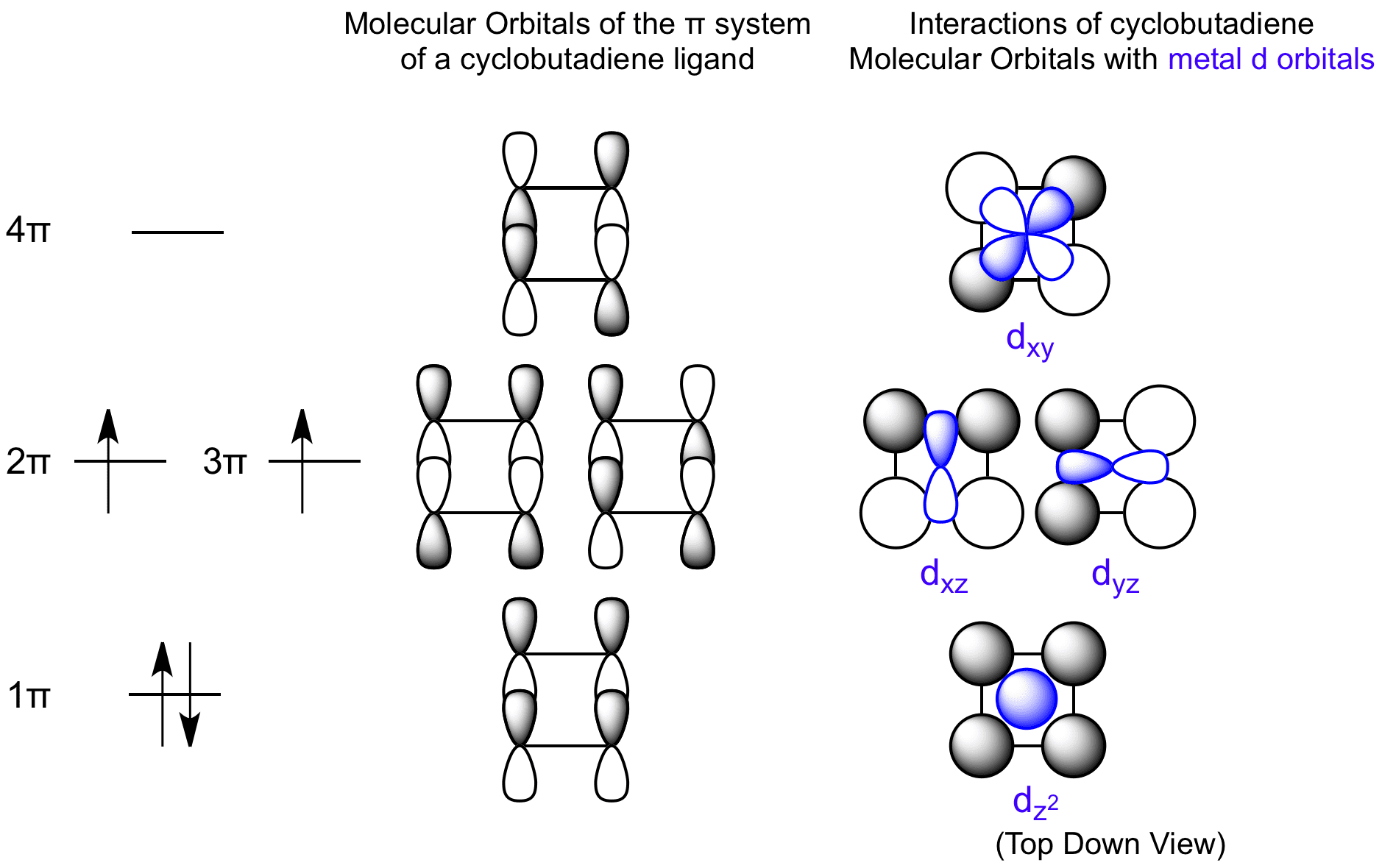 Interactions Between Cyclobuta Ne Molecular Orbitals And