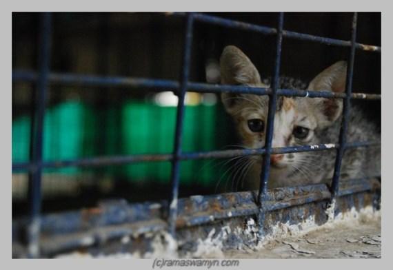 Blue Cross Cats 1