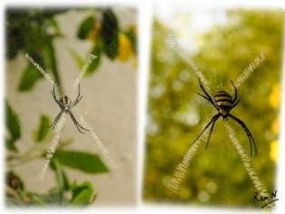 Writing Spider_