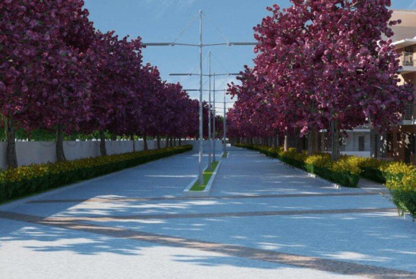 Tree Lined Driveways