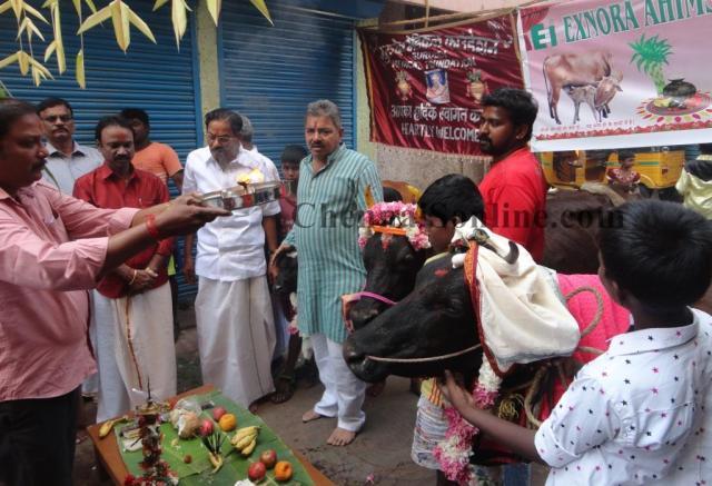 Chennai PONGAL 2016 images