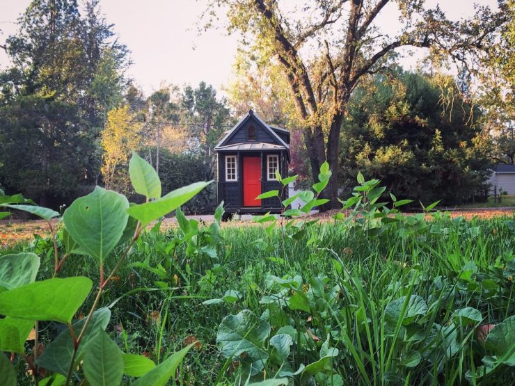 tiny-house-and-weeds