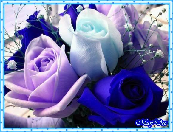 1006317_613709862003243_711107706_n