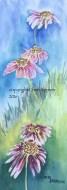 """Upsy Daisy"" framed watercolor 19"" x 10"" $200 copyright C Isgreen"