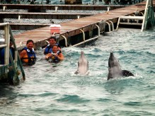Dolphin Discovery, Cozumel