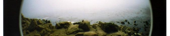cropped-ocean-squirrel.jpg