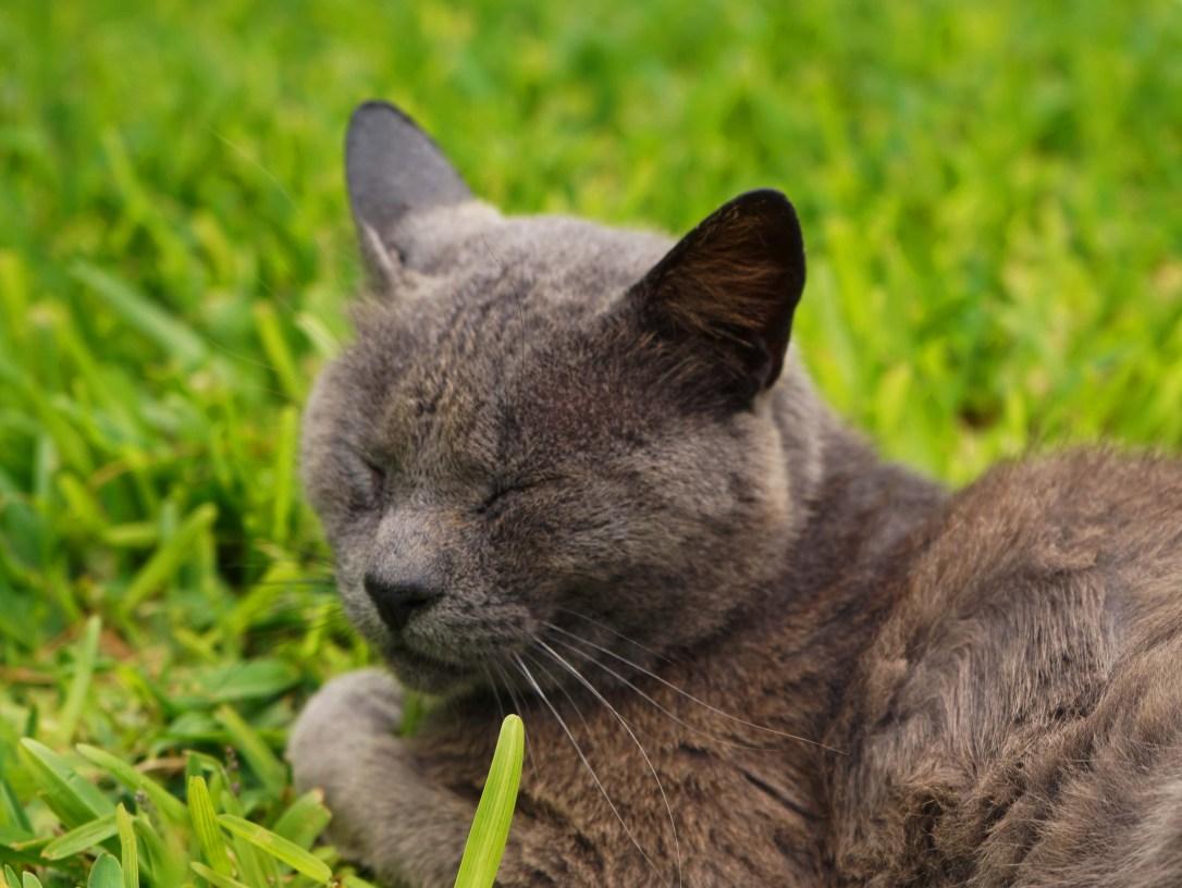 parque-kennedy-cat