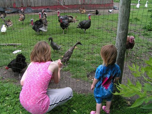 Meeting the birds.