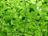 leaves-167478_1920