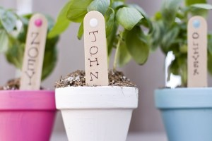 terracota herb favor