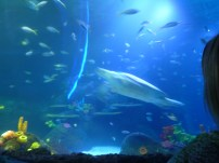massive sea turtle