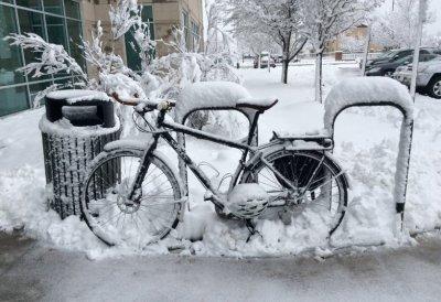 Colorado Bike 1Teds Bike