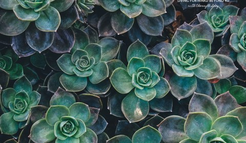 Succulent ipad wallpaper