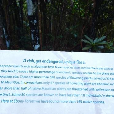 Mauritius Ebony Rainforest Cherrylsblog.com DSCN0158