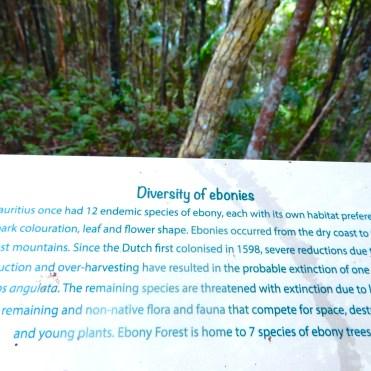 Mauritius Ebony Rainforest Cherrylsblog.com DSCN0159