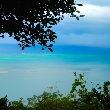 Mauritius Ebony Rainforest Cherrylsblog.com DSCN0201