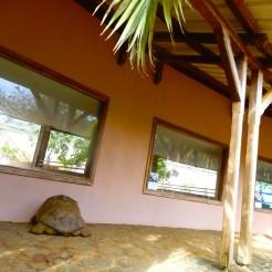 Mauritius La Vanille Nature Park Crocodile Park DSCN0391