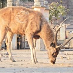 India Ranthambore Safari cherrylsblog.com DSCN9626