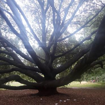 St James Park London cherrylsblog.com trees branches 20200831_160414