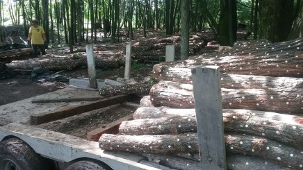 moving logs!