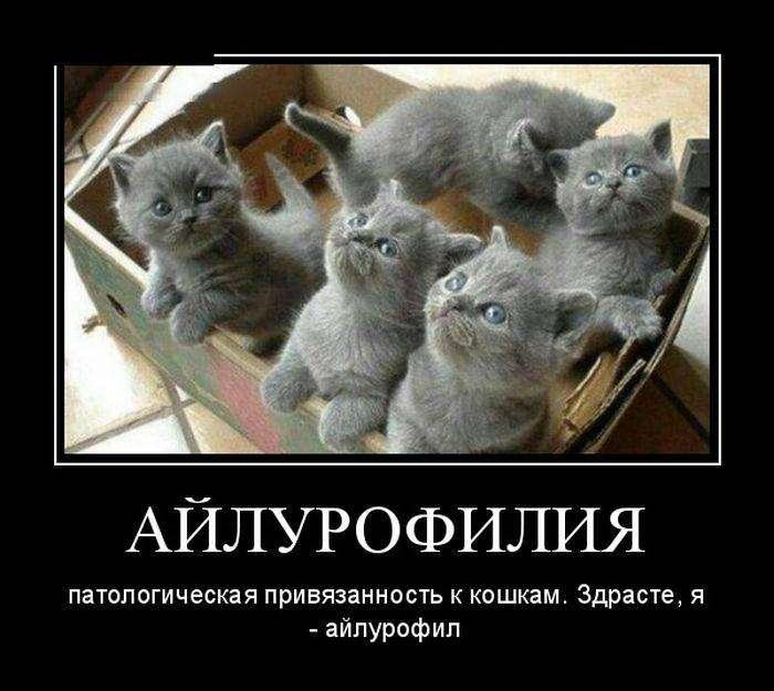 Демотиваторы на 17.09.2015г (30 фото)