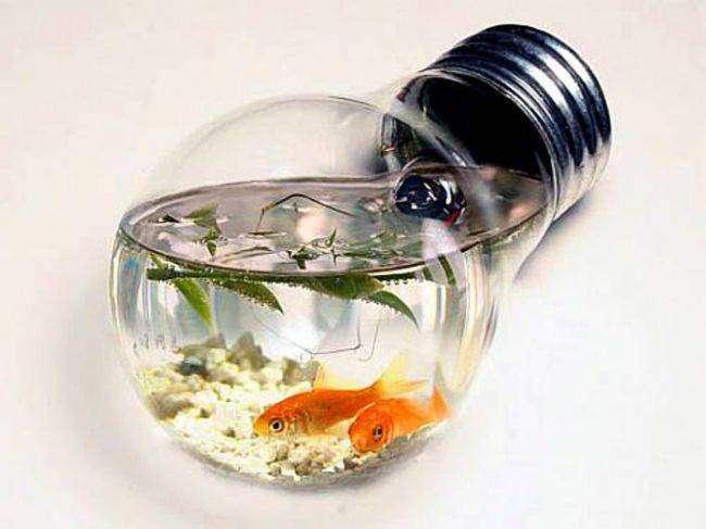Оригинальные и необычные аквариумы