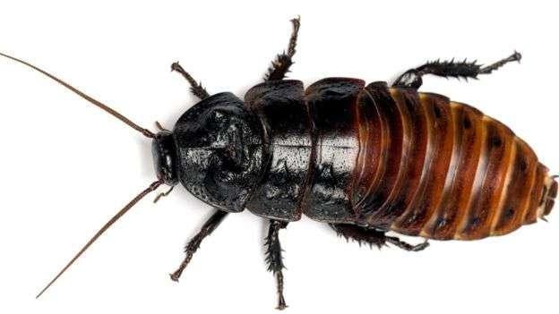 Ученый рассказал о миссии тараканов на Земле