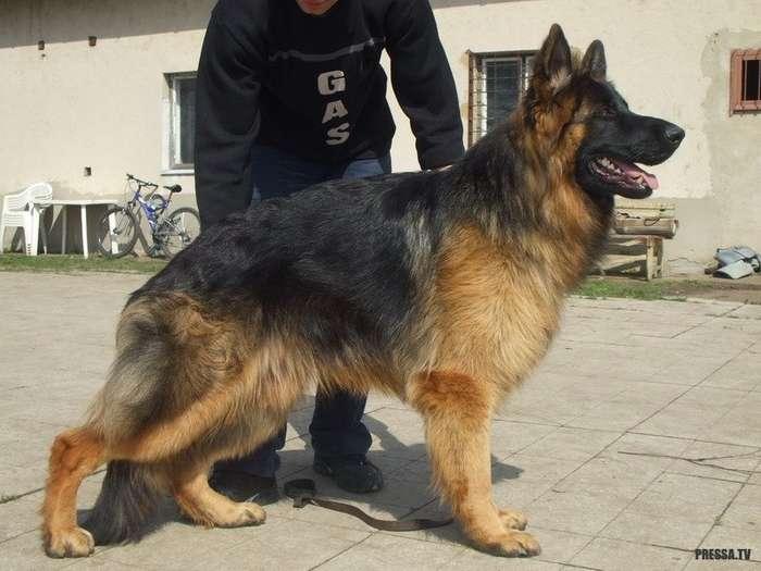 Для милиции собака - это хорошо, для пьющих граждан - плохо!