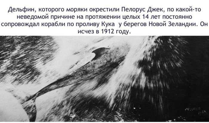 Факты о дельфинах-16 фото-