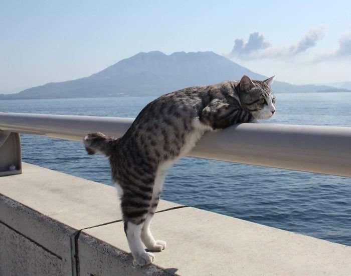 Фото японского кота, которые заставят тебя сказать: -Как скучно я живу-