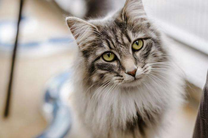 Высшая миссия: магические способности домашних котов -5 фото-