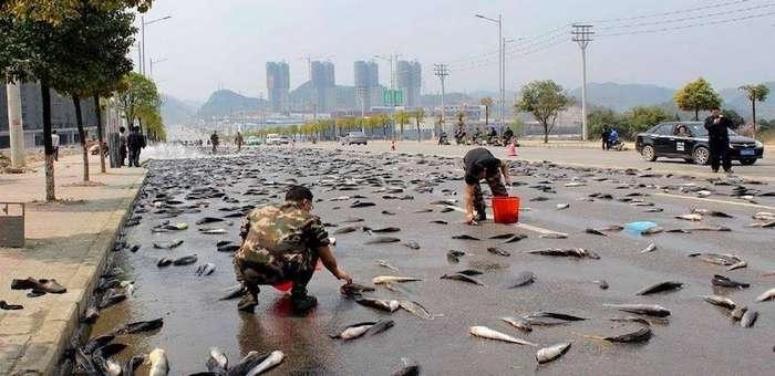 Рыбный дождь: красивая легенда и происхождение ежегодного чуда бедного городка