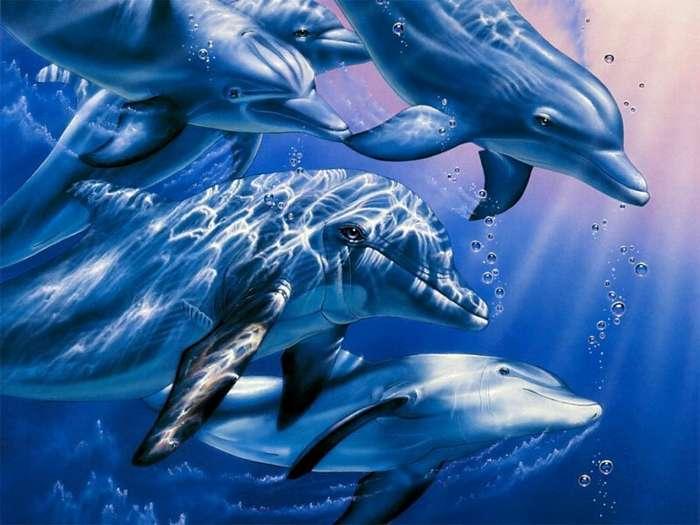 Как дельфины выбирают себе друзей-1 фото-