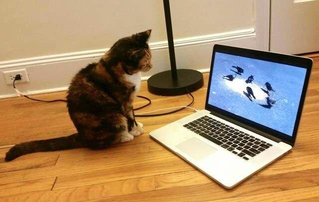 Кошка побегала по клавиатуре и выиграла 100 тысяч долларов-7 фото-