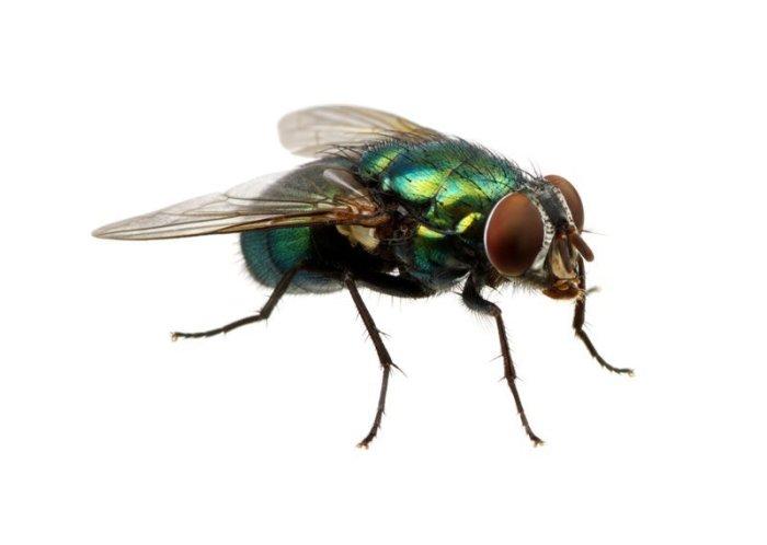 Почему мухи потирают лапки друг о друга?-2 фото-