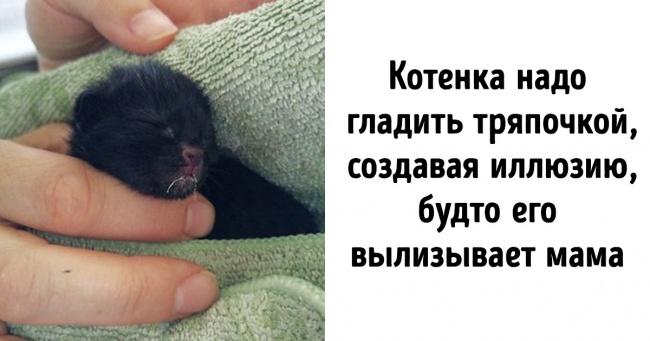 Как ухаживать за новорожденным котенком, если от него отказалась мама или вы нашли его на улице