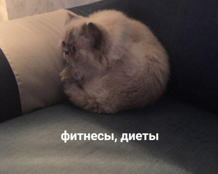 Бодипозитив от котейки
