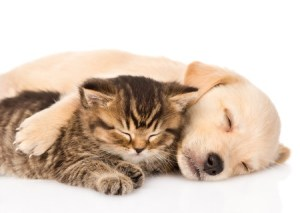 Cat and dog sleeping together for CHC 404 error page