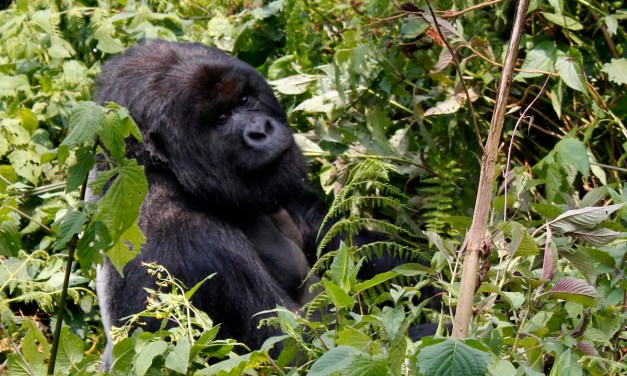 Bucket List Friday – From losing weight to Gorilla Trekking