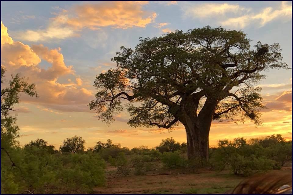 BOABABS – GIANTS OF THE AFRICAN LANDSCAPE