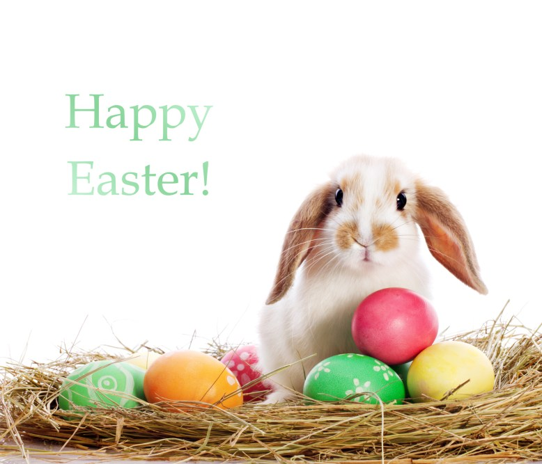 Funny little rabbit among Easter eggs in velour grass isolated on white