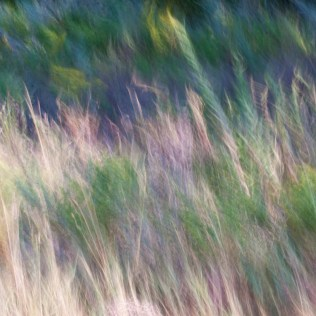 Wind Dancing 43
