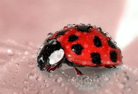 Having a ladybug land on you is a sign of good luck.