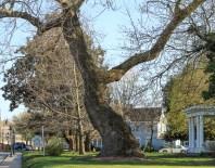 Healilng Tree in Berlin MD